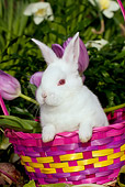 RAB 01 LS0014 01