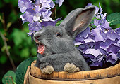 RAB 01 LS0015 01