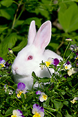 RAB 01 LS0016 01