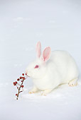 RAB 01 LS0017 01