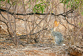 RAB 01 MC0001 01