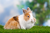 RAB 01 PE0001 01