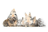 RAB 01 PE0005 01