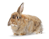 RAB 01 PE0007 01