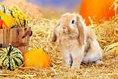 RAB 01 PE0009 01