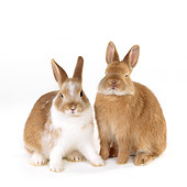 RAB 01 RK0025 04