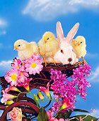 RAB 01 RK0034 01