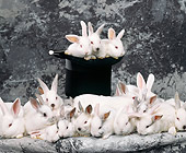 RAB 01 RK0037 16