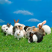 RAB 01 RK0058 15