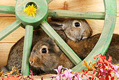RAB 01 SJ0004 01