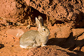 RAB 01 SK0001 01
