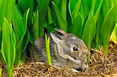 RAB 01 TK0001 01
