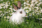 RAB 01 WF0002 01