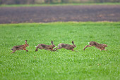 RAB 01 WF0005 01