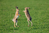 RAB 01 WF0006 01
