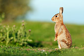 RAB 01 WF0008 01