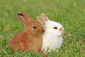 RAB 01 WF0009 01