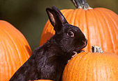 RAB 01 GR0002 03