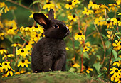 RAB 01 GR0003 01