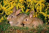 RAB 01 GR0013 01