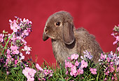 RAB 01 GR0041 01