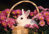 RAB 01 GR0043 02