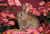 RAB 01 GR0045 02