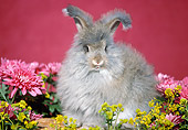 RAB 01 GR0046 03