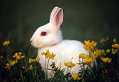 RAB 01 GR0073 01