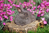 RAB 01 GR0091 01
