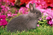RAB 01 GR0094 03