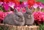 RAB 01 GR0100 01