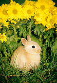 RAB 01 GR0109 01