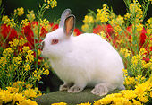 RAB 01 GR0115 01