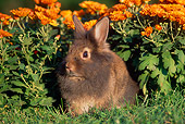 RAB 01 GR0131 01