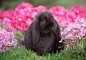 RAB 01 GR0139 02