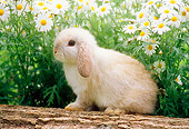 RAB 01 GR0141 01