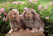 RAB 01 GR0157 04