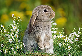 RAB 01 GR0160 01