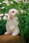 RAB 01 GR0171 01