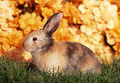 RAB 01 GR0187 02