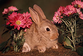 RAB 01 GR0197 02