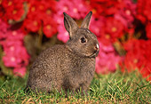 RAB 01 GR0220 01