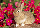 RAB 01 GR0245 02