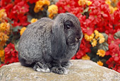 RAB 01 GR0253 01