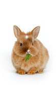 RAB 01 KH0003 01