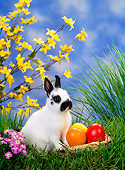 RAB 01 KH0024 01