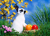 RAB 01 KH0025 01