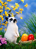 RAB 01 KH0026 01