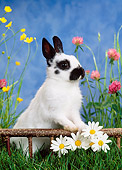 RAB 01 KH0027 01
